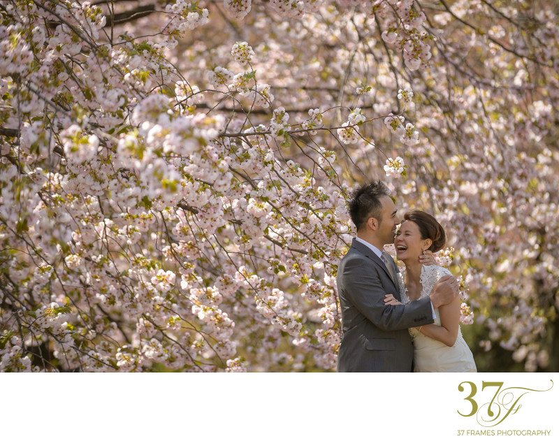 Prewedding Blossoms Photography Brisbane