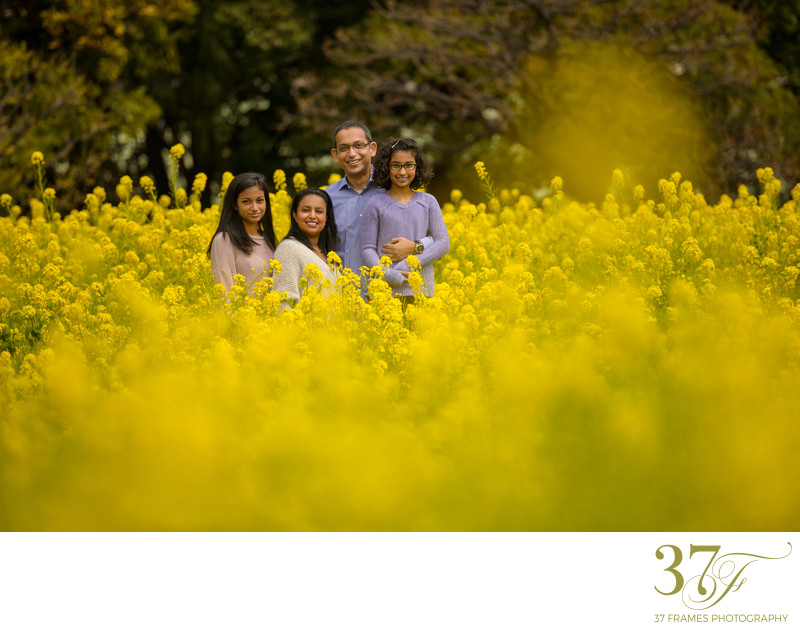 Spring family photography in Brisbane