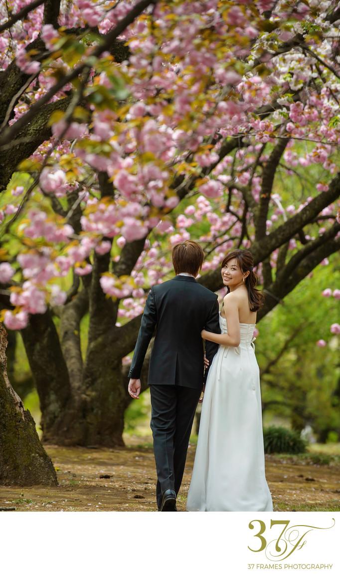 Brisbane with blossoms Pre-wedding destination photos