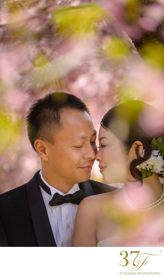Prewedding Blossoms Photography Queensland