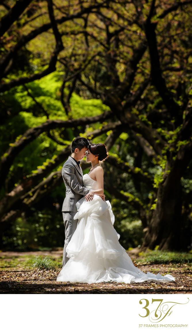 Award-winning Location Prewedding Photographers Queensland