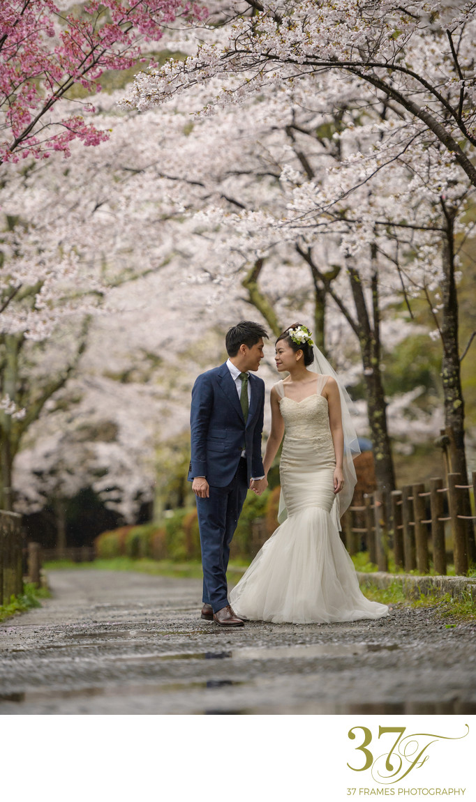 Destination Pre-wedding with beautiful blossoms