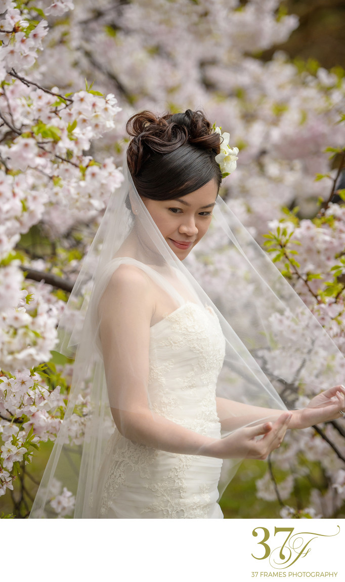 Pre-Wedding Photography Bride and blossoms