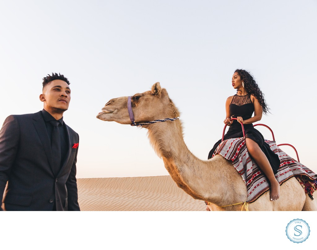 Dubai Camel Engagement