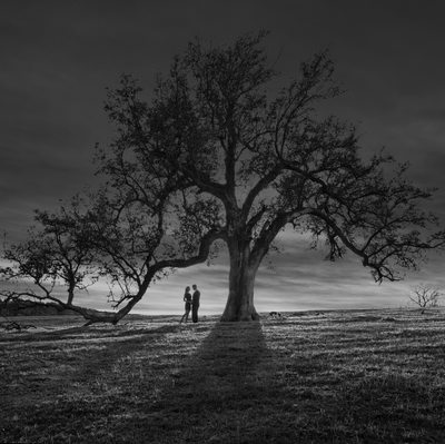 Sunset Engagement Portrait Couple Live Oak Tree