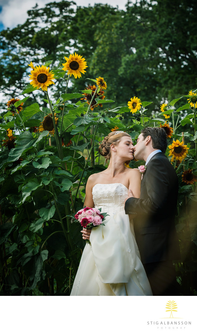 Brudpar kyss bland solrosor i trädgården Gunnebo slott