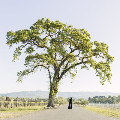 Couple Under a Tree, Napa Engagement