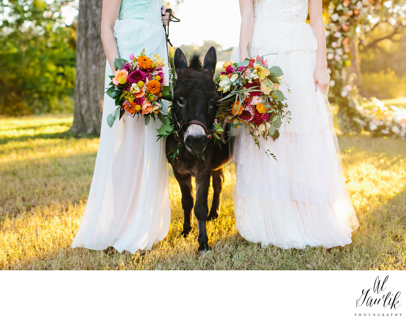 Wedding Donkeys