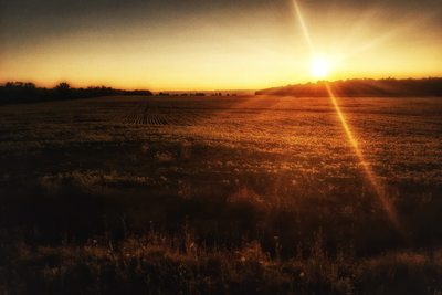 Country field sunset