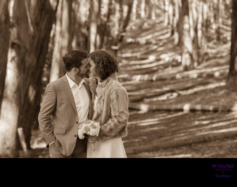 woodline sepia photo