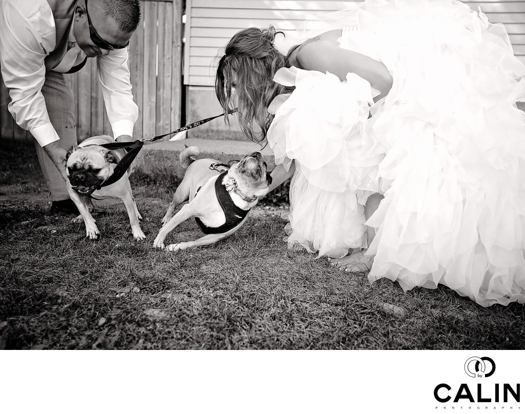 Bride Groom Pugs