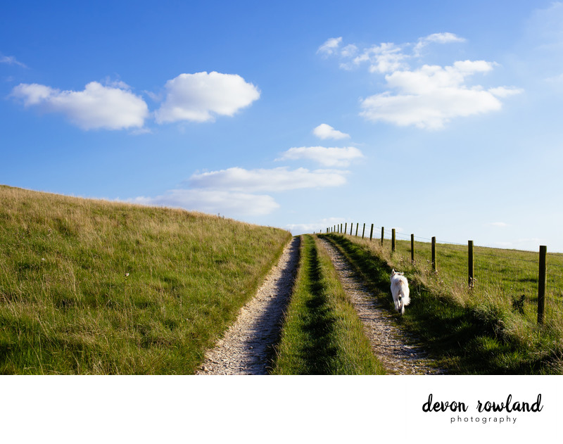 Travel Photography in the UK on Dog Walk in England