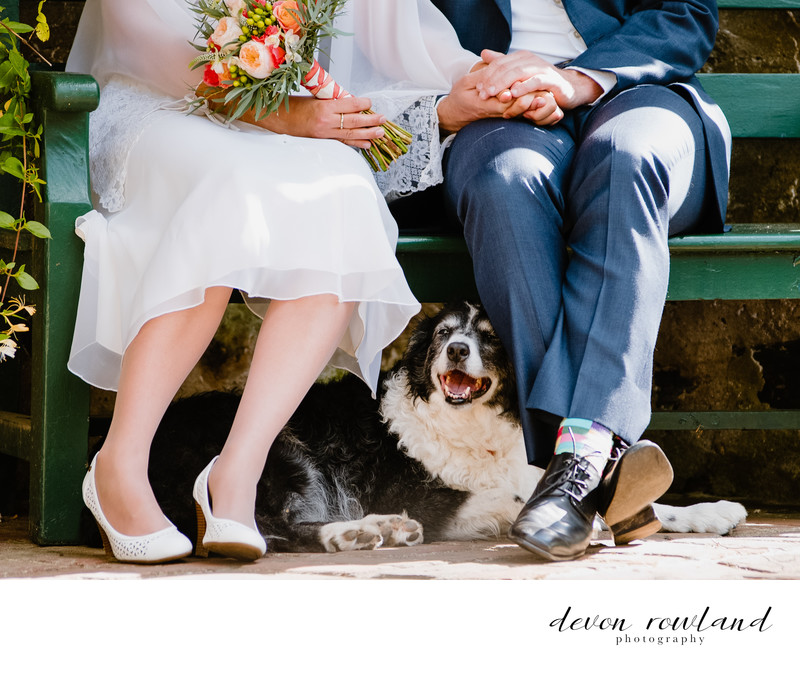 Destination Wedding Ceremony Meets Dog Days of Summer