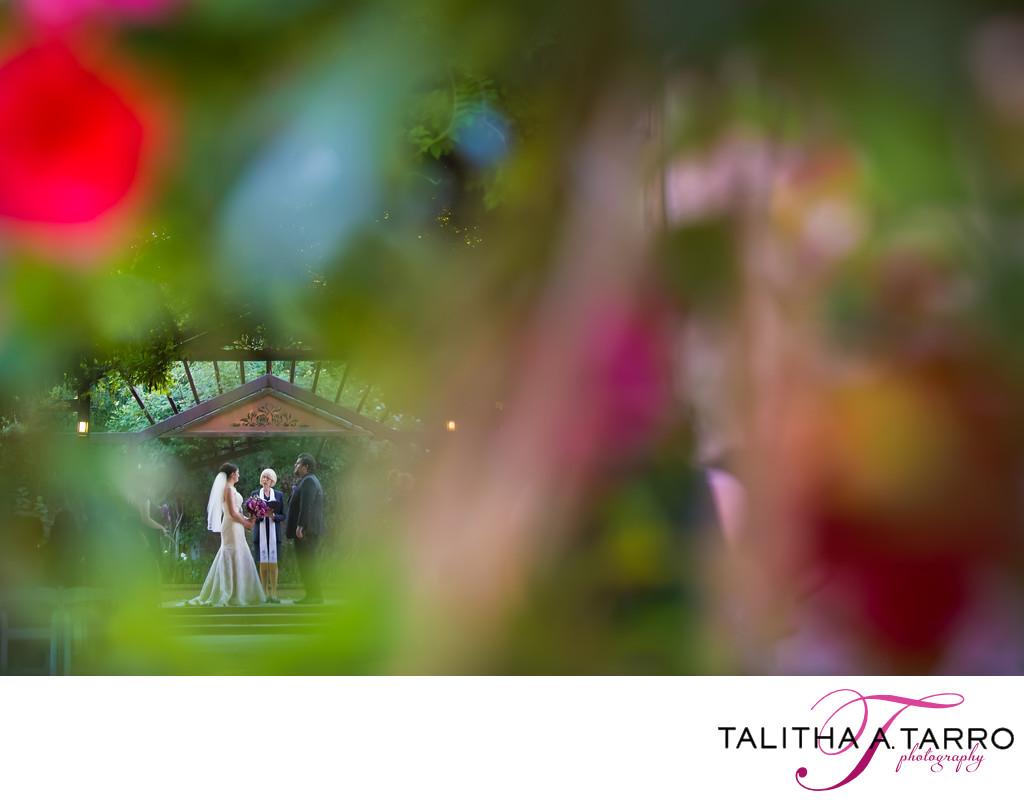 Wedding photography at Botanic Gardens
