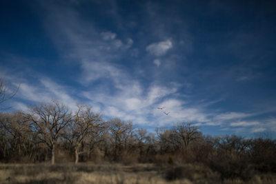 Birds overhead in the bosque