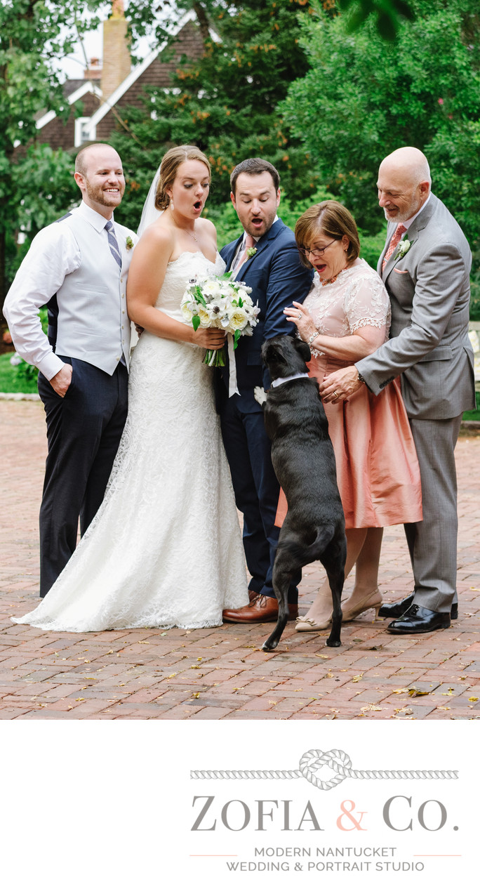 wedding dog jumps during portraits westmoor farm