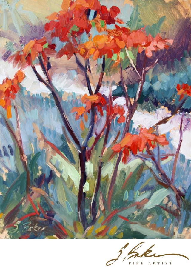 Aloe Striata, 10 x 8