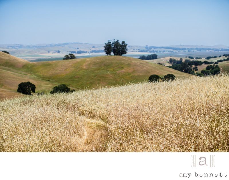 wedding in the fields of Napa, California