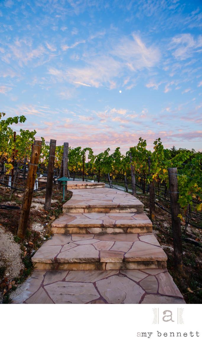 stairs in vineyard