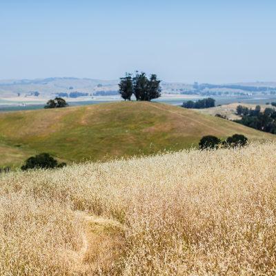 wedding in the fields of Napa, California
