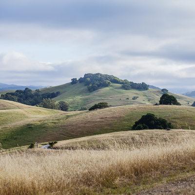 fields in Sonoma Napa