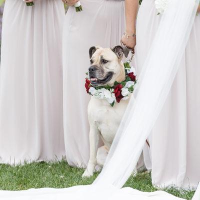 Bridesmaid Dog