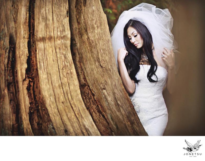 Westcoast bridal portrait with huge cedar tree and veil