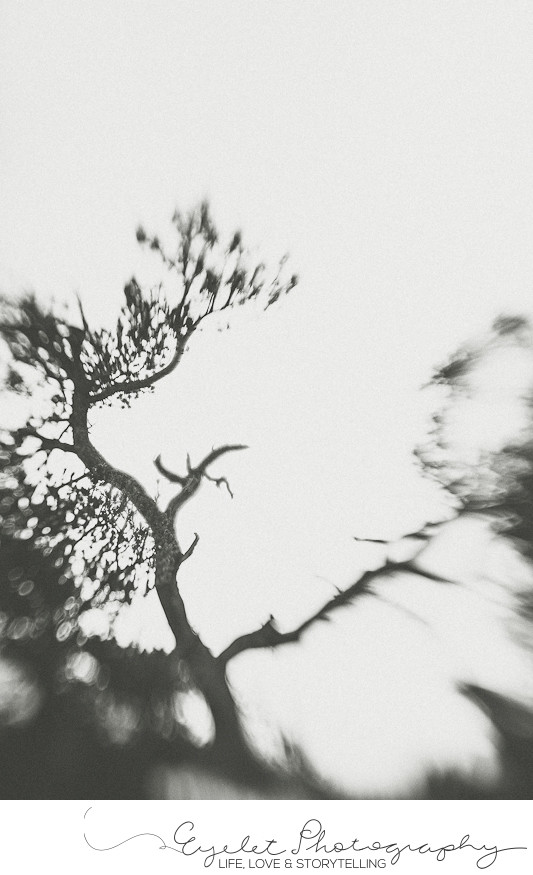 Lensbaby Abstract Fine Art Tree Photography