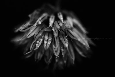 Macro Flower Photography Black and White