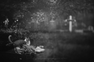 Meowing Cat in a Cemetery in Reykjavik Iceland