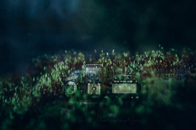 Double Exposure Photography Canon Camera in Moss
