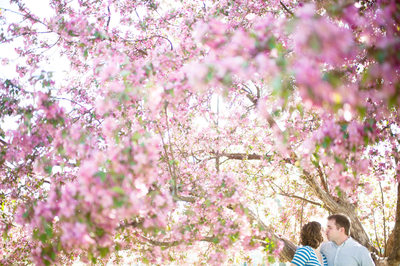 Cherry Blossom Engagement Portraits In Curtis Park