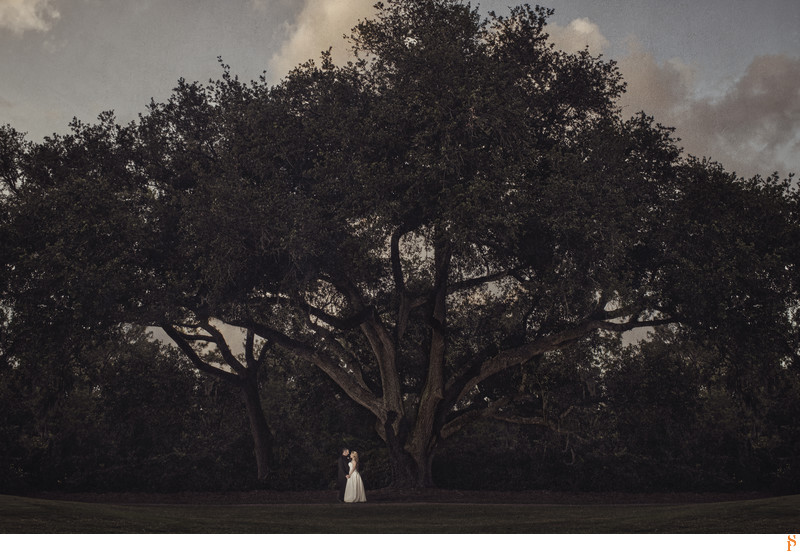 BRIDE AND GROOM UNDER A TREE ON THEIR WEDDING DAY