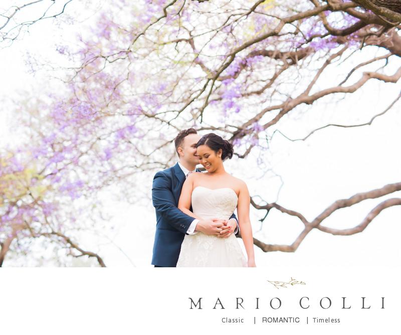 Jacaranda trees wedding photos victoria park