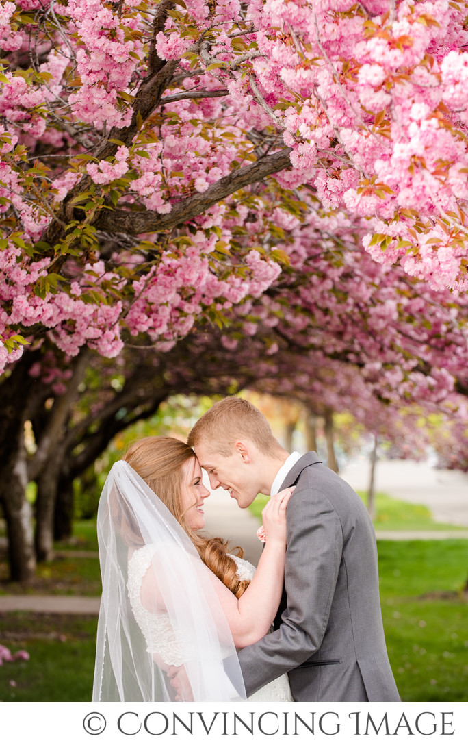 Logan Wedding Photographer Spring Blossoms