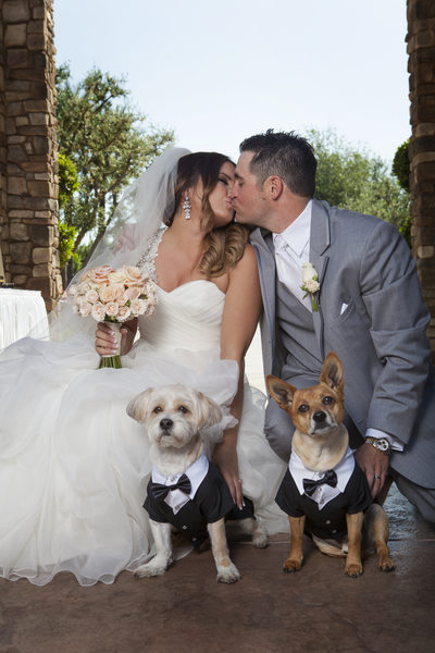 Wedding couple with their dogs