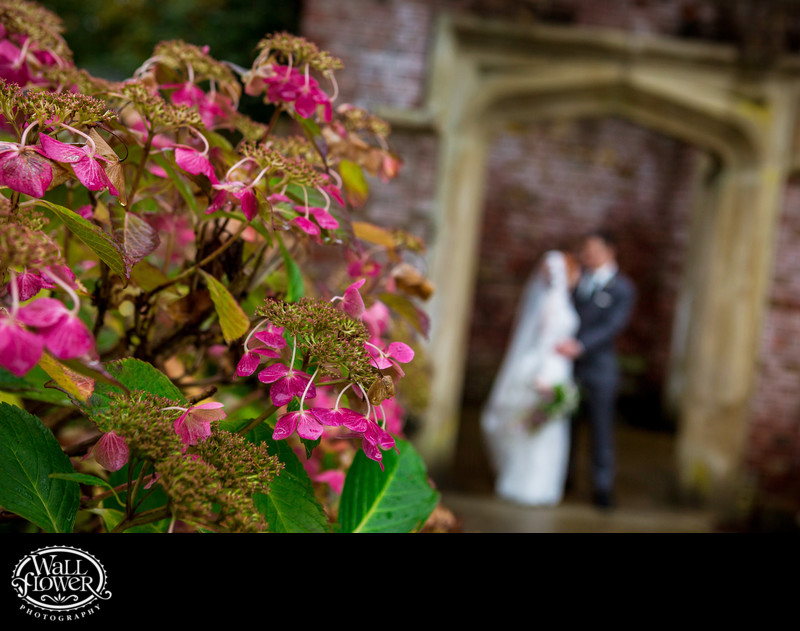 Detail of hydrangea flowers in Thornewood Castle garden