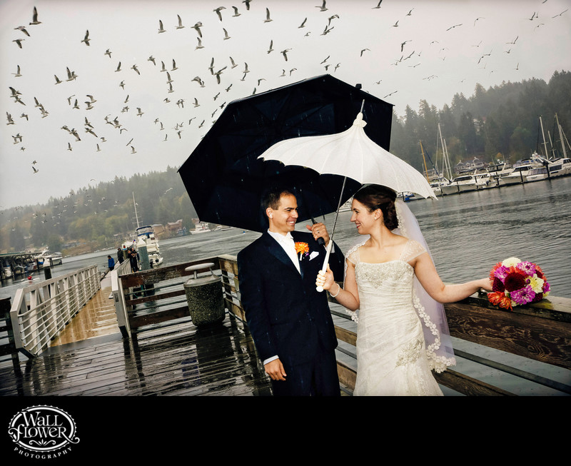 Rainy Gig Harbor dock with umbrellas, flock of seagulls