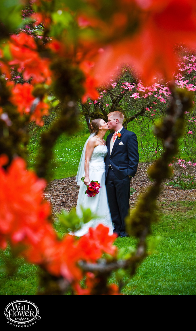 Kissing bride and groom, framed by orange flowering azalea in UW arboretum