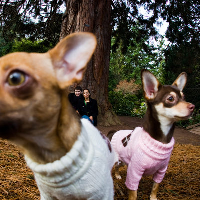 Engagement portrait with Chihuahuas in sweaters