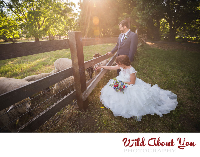 ardenwood wedding photographer