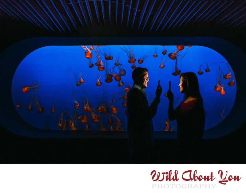 monterey bay aquarium engagement photography
