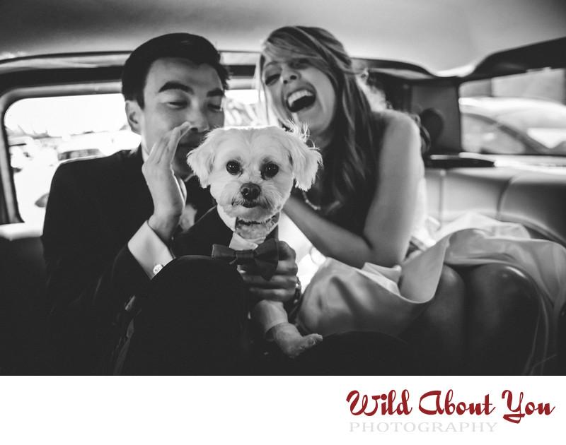 san francisco wedding dog photography