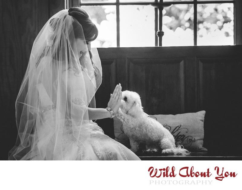 sf bay area dog wedding photographer