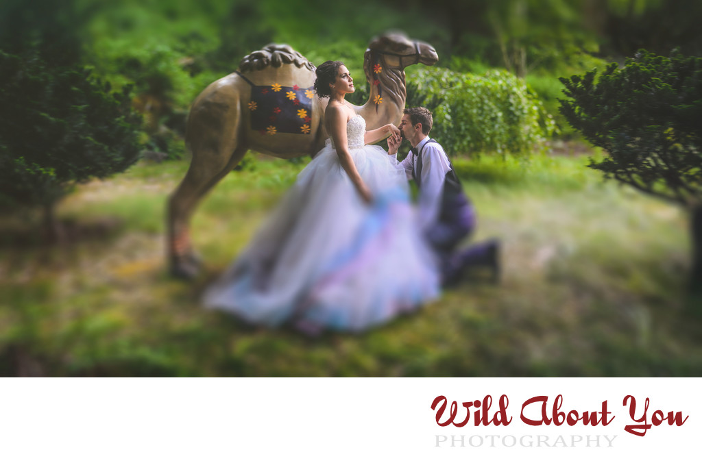 bay area fairytale wedding photography