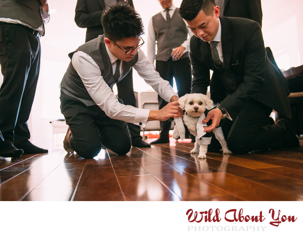 dog in tux wedding photography