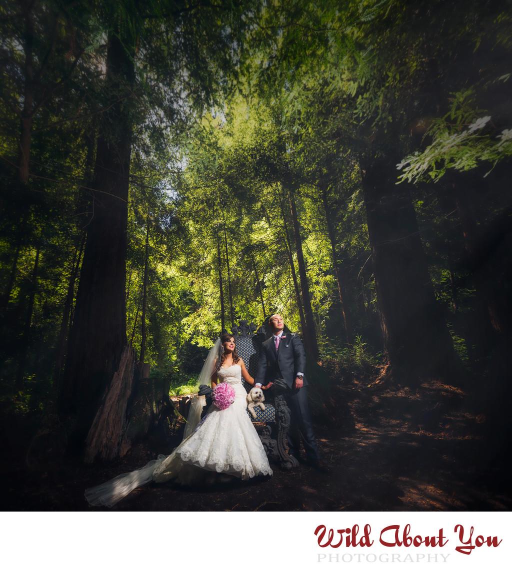 nestldown wedding photographers