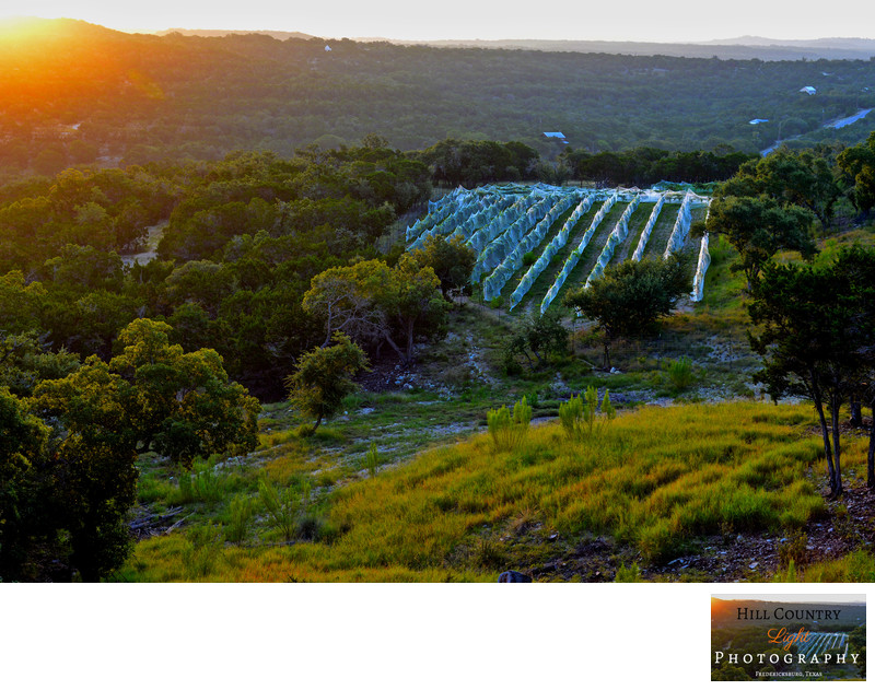 Sunrise over Hawks Shadow Vineyard Dripping Springs Texas