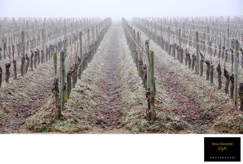 Petrus Pomerol Buttonhole Merlot World Class Vineyard