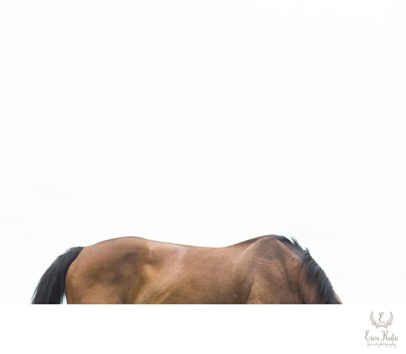 Equine Fine Art Print